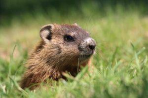 groundhog-day-usa