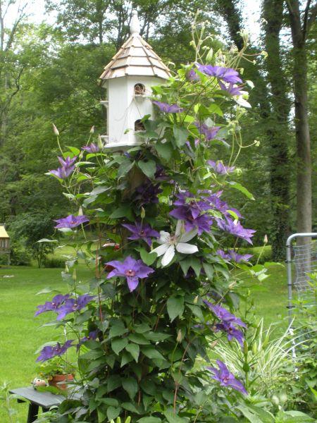 beautiful home for the birds zinnia designs. Black Bedroom Furniture Sets. Home Design Ideas